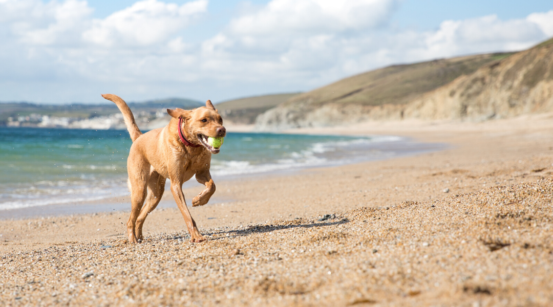 Dog Friendly Holiday In Cornwall